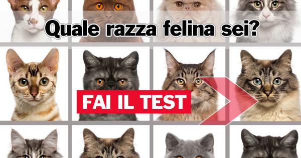 Quale razza felina sei?